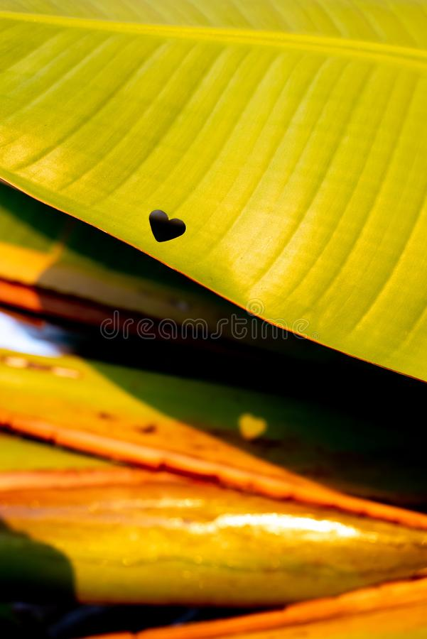 LEITMOTIV 04 DE COEUR photographie stock libre de droits