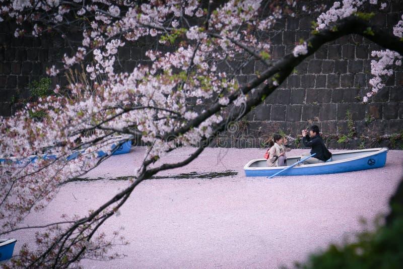 Leito fluvial romântico das flores de cerejeira fotografia de stock
