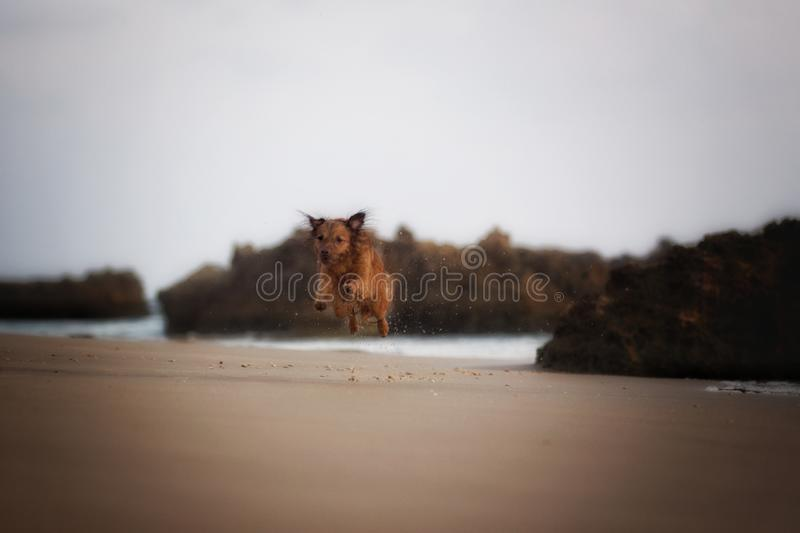 Leitoso meu cão imagem de stock royalty free
