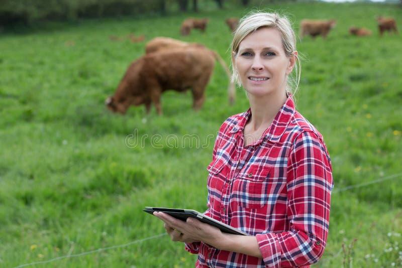 Leitungskühe des weiblichen Landwirts mit Tablette stockfotos