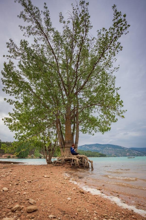 Leitura da mulher que senta-se em uma árvore na costa de um lago foto de stock