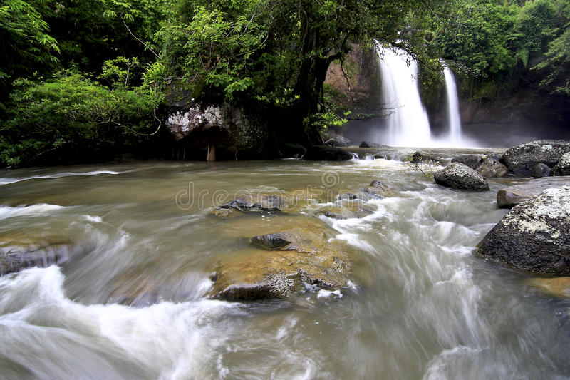 Leje się w lesie podczas tropikalnego lasu zdjęcia stock