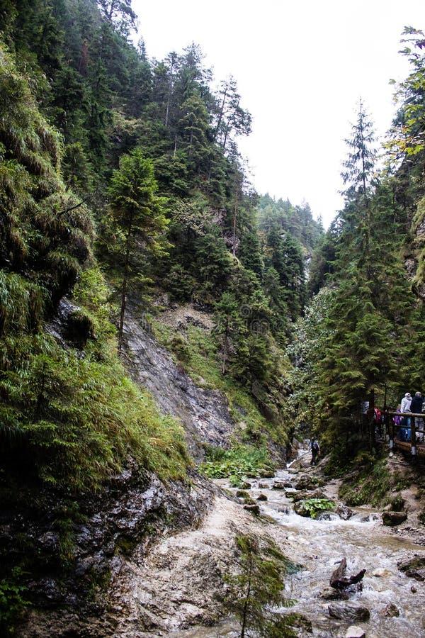 Leje się w naturalnym parku Vysoke Tatry, kwinta obraz royalty free