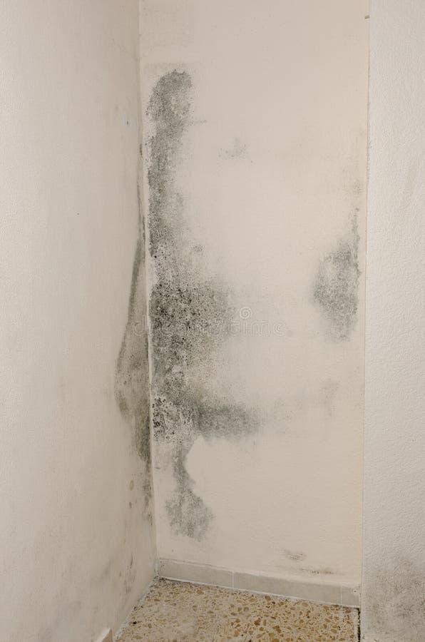 Lejnia i wilgotnościowa budowa up na ścianie zdjęcie stock