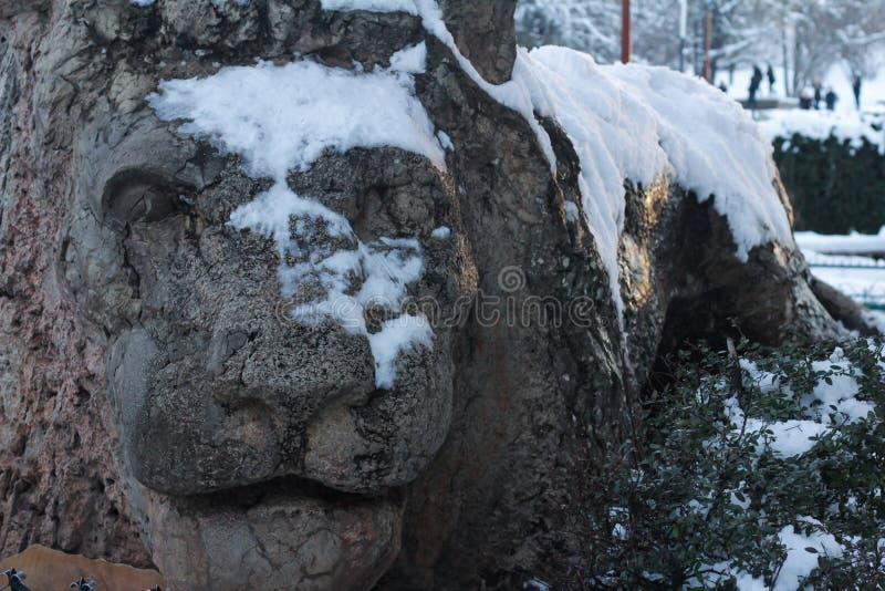 Lejon av Ifrane arkivfoto