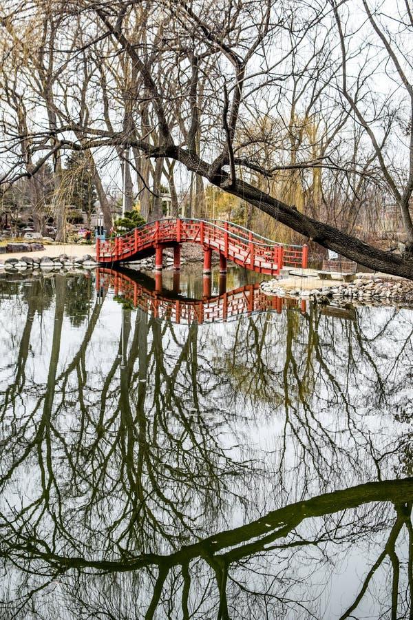 Lejon parkerar dammbroreflexionen - Janesville, WI royaltyfri fotografi