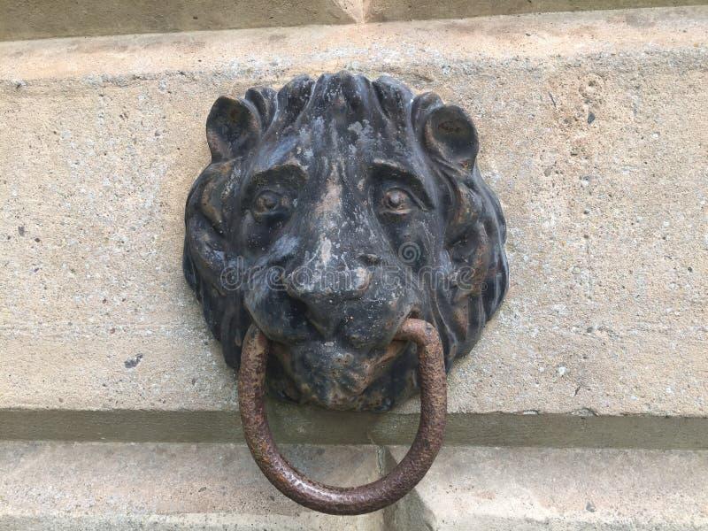 Lejonhuvud som förtöjer 2 fotografering för bildbyråer
