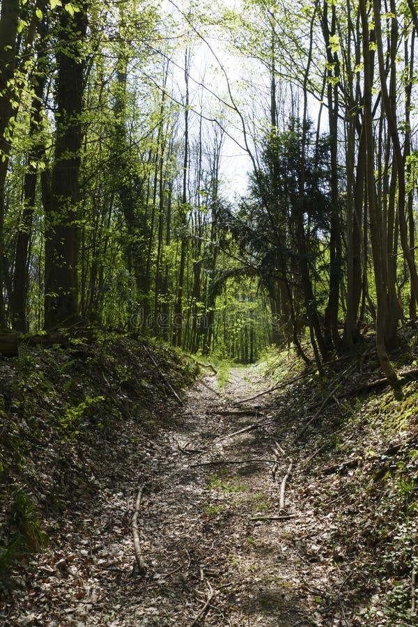 Lejos en la madera que lleva al parecer en la infinita, en la primavera foto de archivo libre de regalías