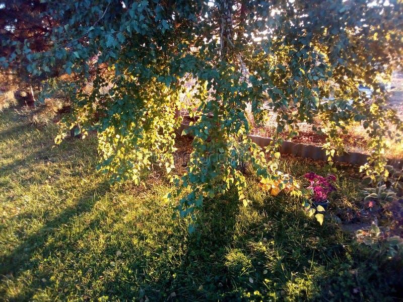 Lek av ljust Röda höstfärger - och gula sidor Den tidiga hösten är varma och klara, men naturändringsfärger royaltyfria bilder