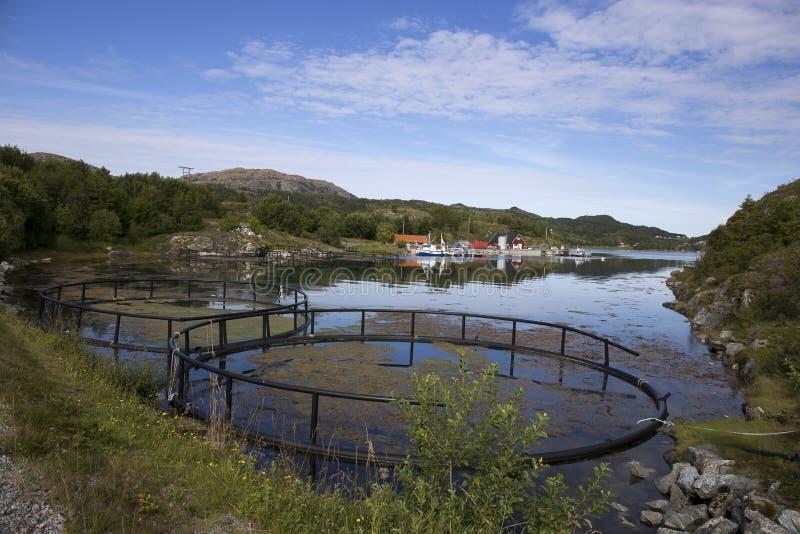 Leka ö, Norge, fisk-lantbruk arkivbilder
