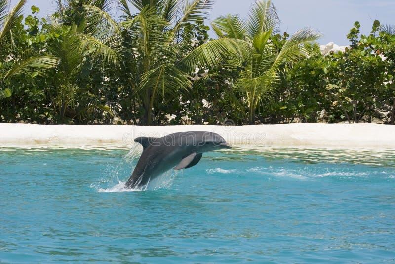 leka för delfin fotografering för bildbyråer