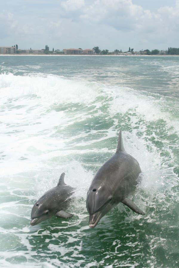 leka för delfiner arkivfoton