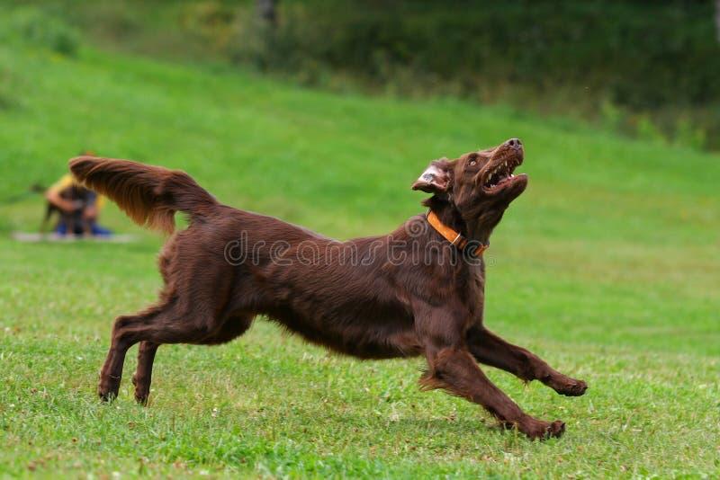 leka för diskhundflyg royaltyfri fotografi