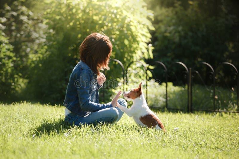 leka för hundflicka Jack Russell Terrier i natur Sommar arkivfoto