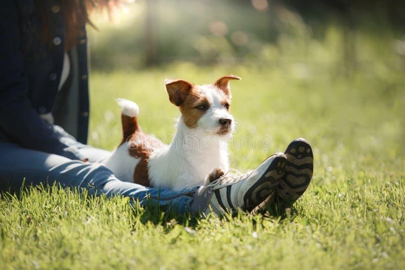 leka för hundflicka Jack Russell Terrier i natur Sommar arkivfoton