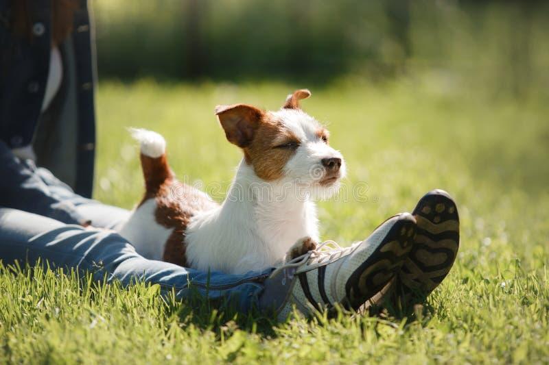 leka för hundflicka Jack Russell Terrier i natur Sommar royaltyfria bilder
