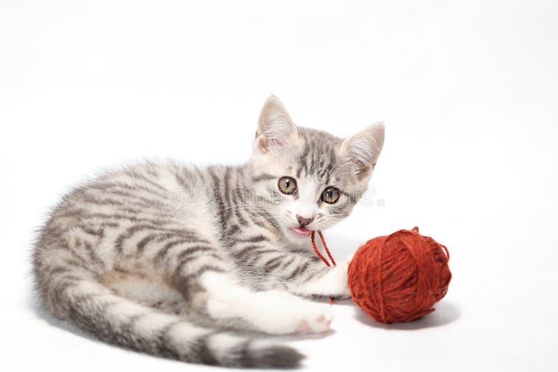 leka för katt royaltyfri fotografi