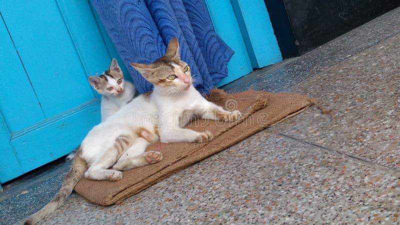 leka för katter arkivfoton