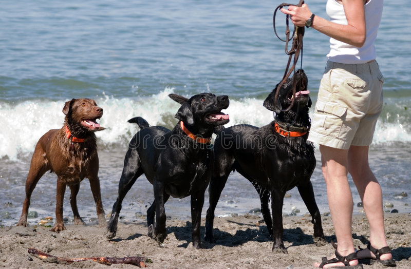 leka för strandhundfetch arkivbild