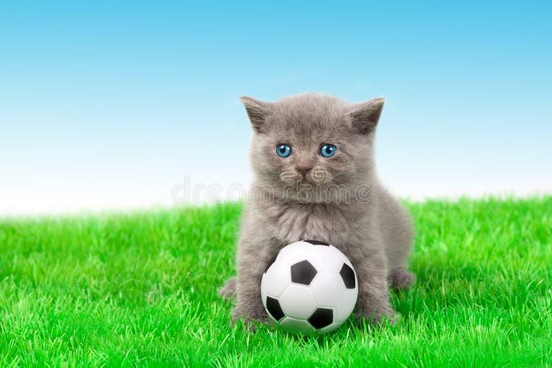 leka fotboll för kattunge royaltyfria foton