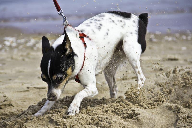 Leka i sanden arkivbild