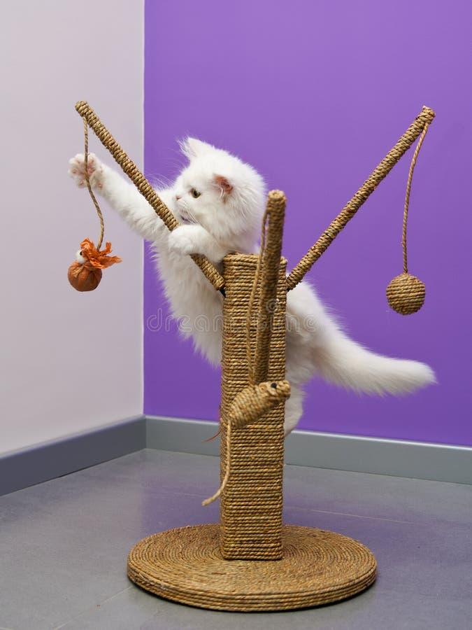 leka toy för kattunge royaltyfri fotografi