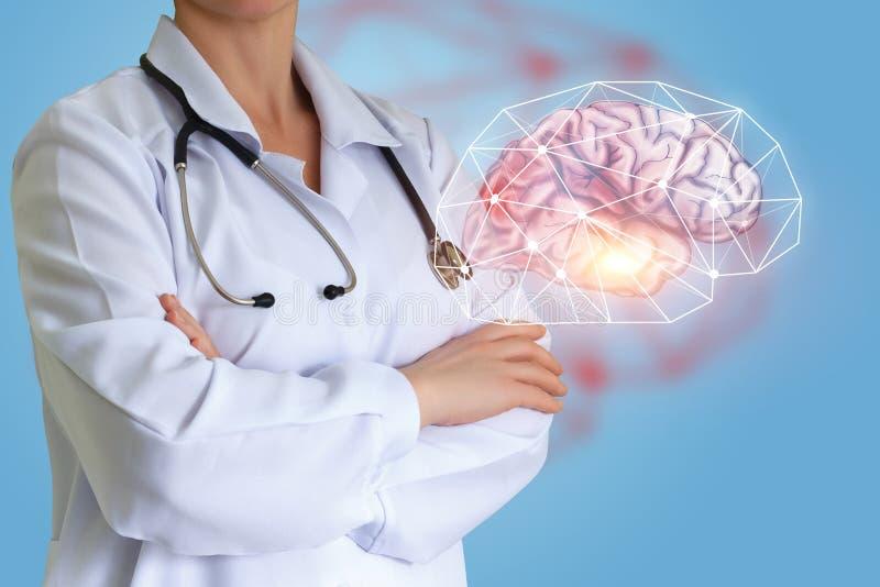 Lekarka pokazuje ludzkiego mózg zdjęcie stock
