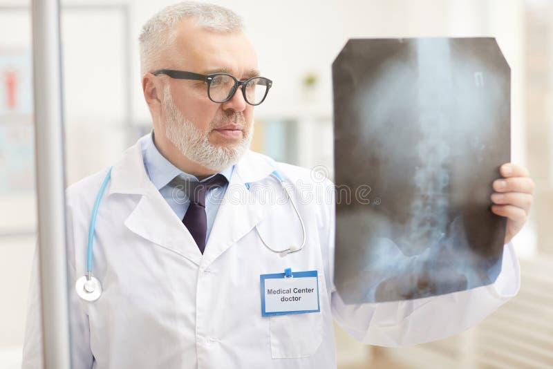 Lekarz analizuje obraz rentgenowski zdjęcie stock