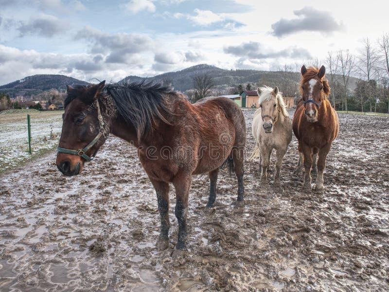 Lekki ciemnego brązu koń je reest trawa lub siano zdjęcie royalty free