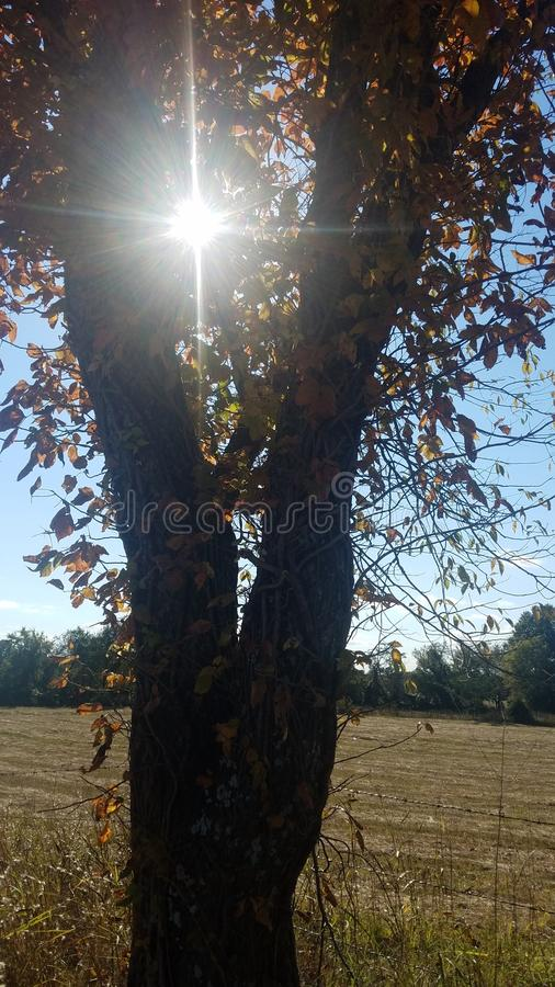 lekki drzewo fotografia stock