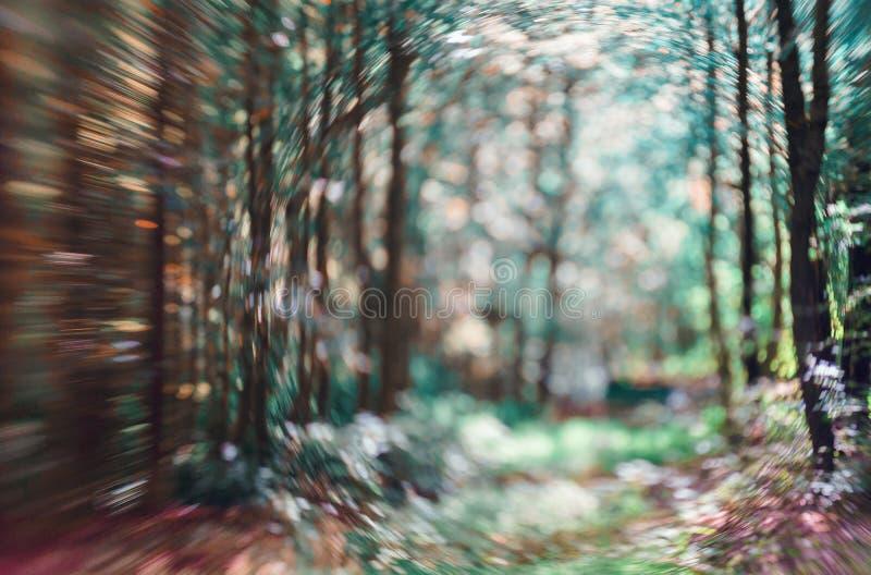 Lekki jaśnienie na drzewnych liściach Rezerwujący plama abstrakta tło Zieleń liści lata wiosny ostrości Bokeh tło obrazy royalty free