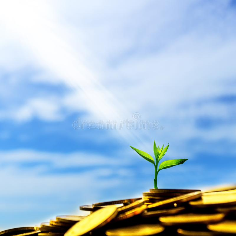 Lekki jaśnienie na małej zielonej roślinie jarzy się na stosie złoto zdjęcia royalty free