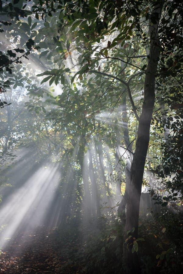 Lekki lać się przez drzew zdjęcia stock