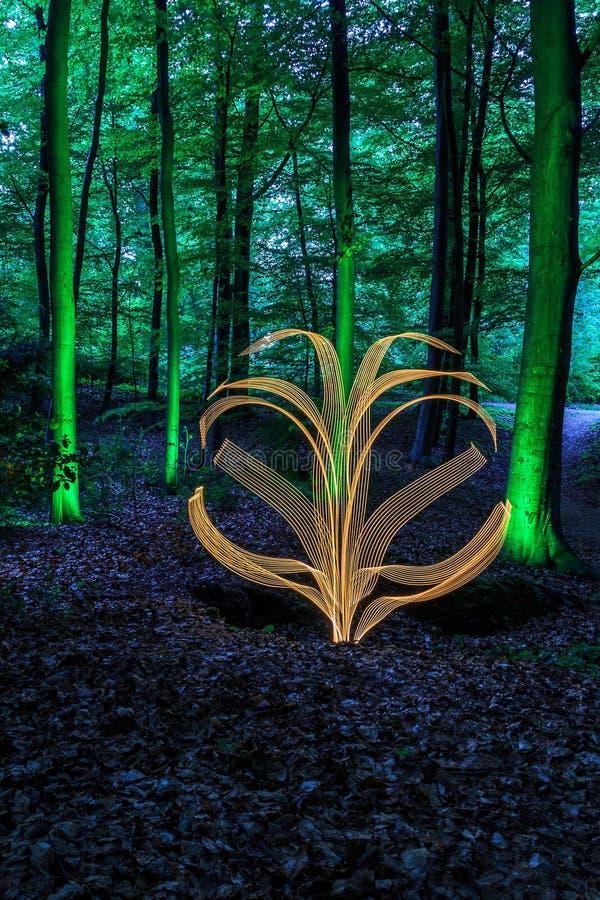 Lekki obraz w lesie zdjęcie stock