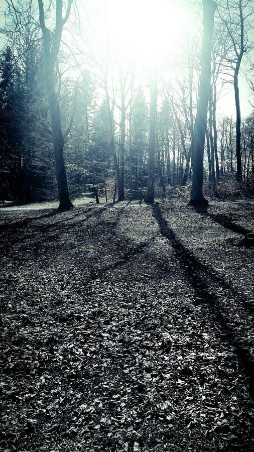Lekki skąpanie w lesie fotografia stock