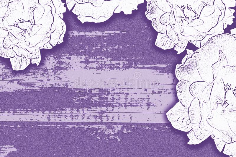 Lekkich róż stylizowany purpurowy tło fotografia stock