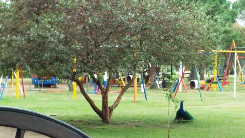 Lekplats för ungar med en påfågel arkivfoto