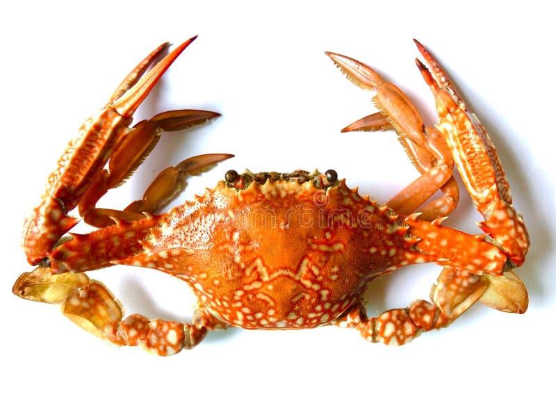 Leks animales del mar de la comida de los mariscos del cangrejo foto de archivo