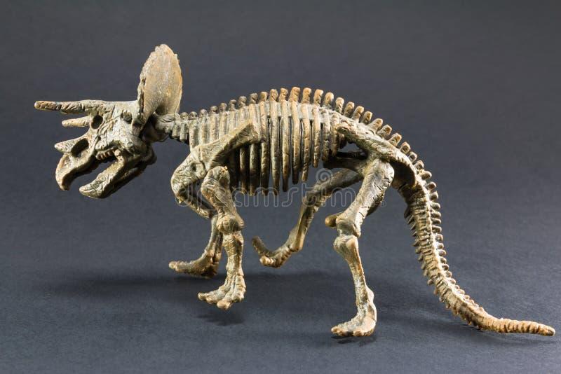Leksak för modell för fossil- dinosaurie för Triceratops skelett- arkivbilder