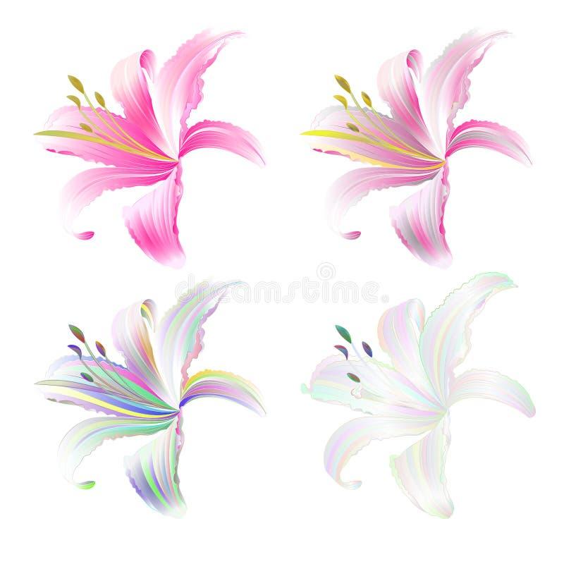 Lelie roze en multi gekleurde Lilium candidum op een witte uitstekende vector editable illustratie als achtergrond stock illustratie