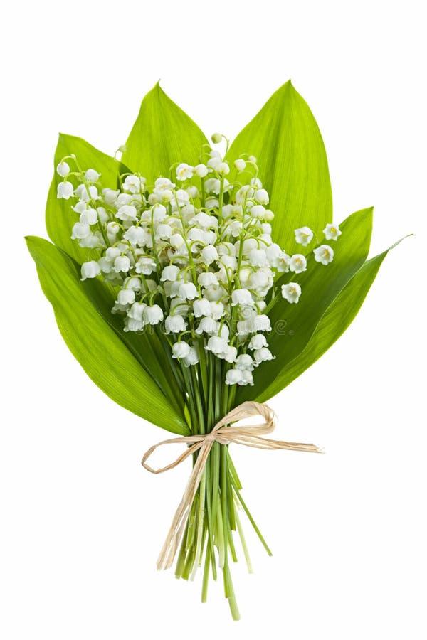 Lelie-van-de-vallei bloemen op wit royalty-vrije stock fotografie