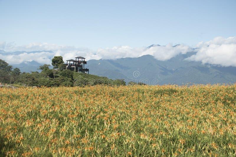 Leliebloemen overal op de bergtop stock fotografie
