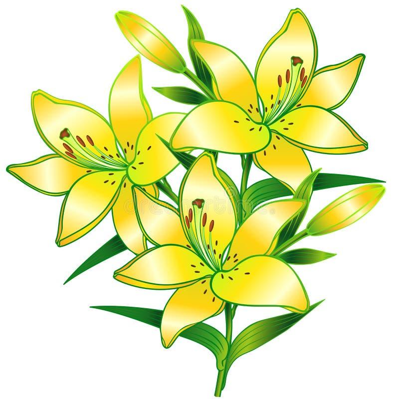 lelies Een tak van lelies met knoppen Gele bloemen vector illustratie
