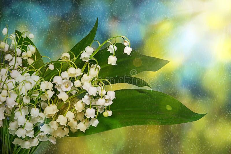 Lelietje-van-dalenbloemen De lentebloemen in de vroege ochtend in de regen royalty-vrije stock foto
