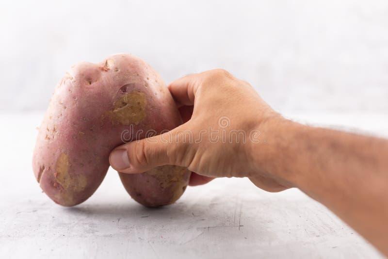 Lelijke aardappel in de hartvorm op een grijze achtergrond Grappige, unnormal groente of het concept van het voedselafval royalty-vrije stock afbeelding