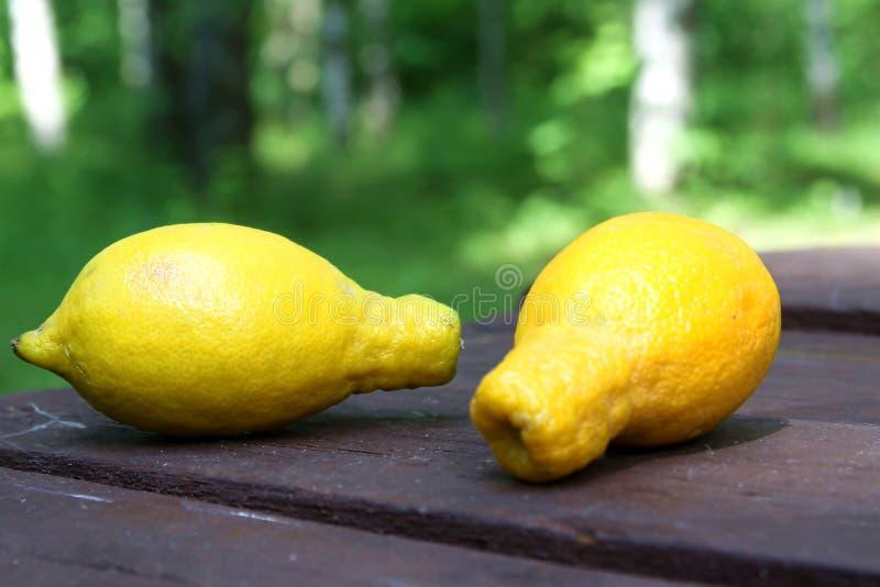 In Lelijke citroen Vreemde vormvruchten op de houten achtergrond van de lijst openlucht, groene tuin royalty-vrije stock foto's