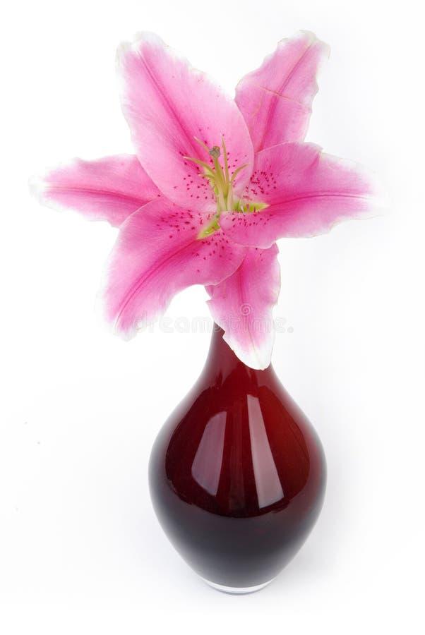 lelui waza różowa czerwona obraz royalty free