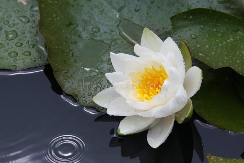 Download Lelui łzy woda obraz stock. Obraz złożonej z natura, rzeka - 13325671