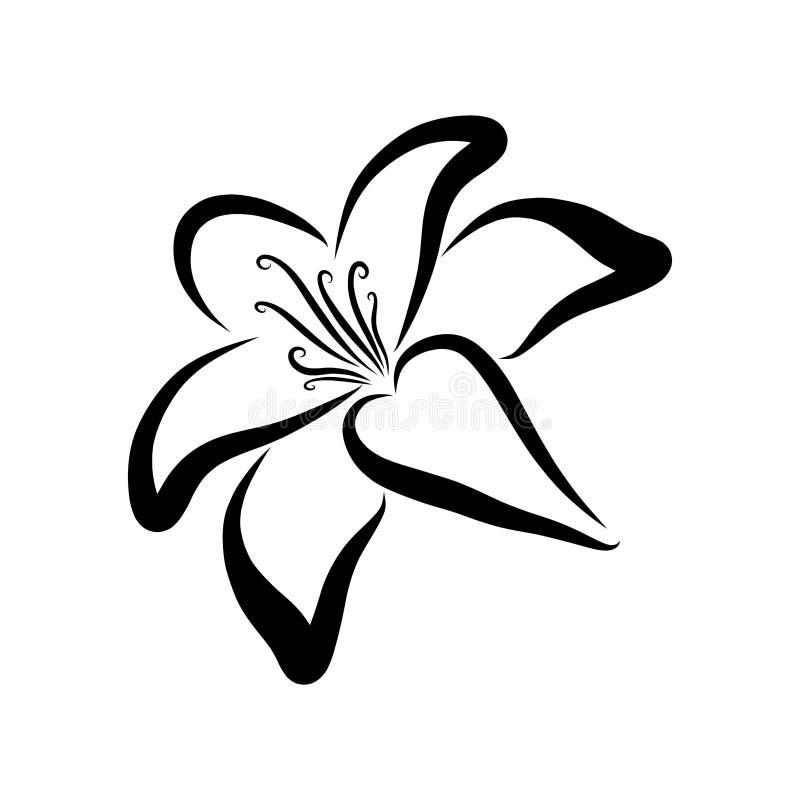 Leluja, czerni nakreślenie, kwiat symbolizuje życie, wzór ilustracji