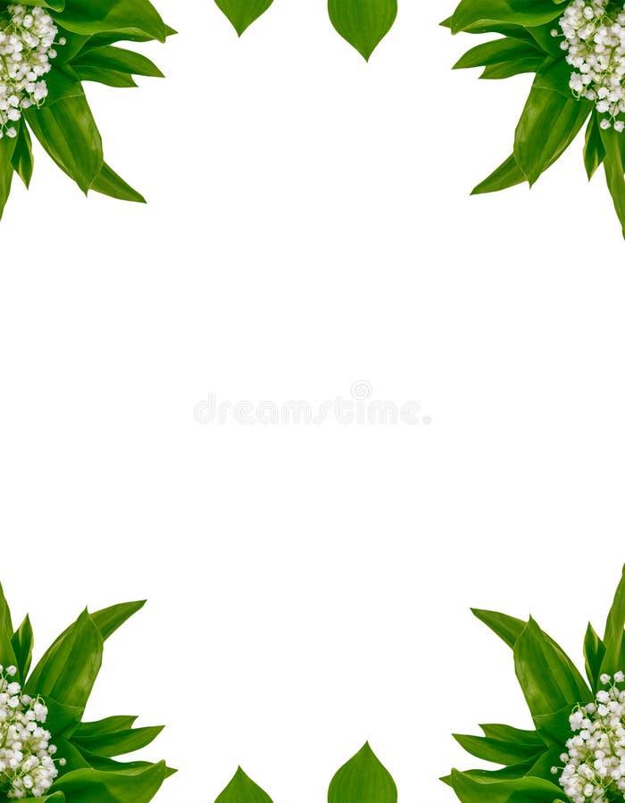 Leluja dolina kwiat obraz royalty free